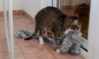 У російському місті красноярську врятували кота