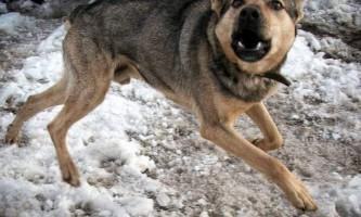 У ростовської області собака, заражена сказом, покусав себе і місцевого жителя
