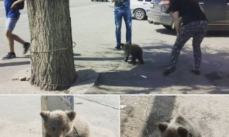 У ростовської області біля придорожнього кафе прикували ведмедика