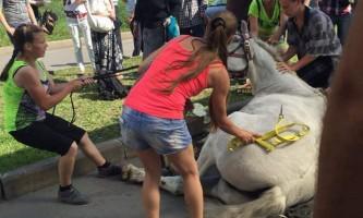 У санкт-петербурзі кінь впав в обморок