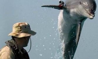 У севастополі відновили підготовку бойових дельфінів для вмс