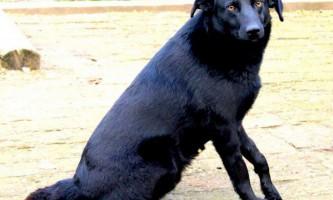 У штаті коннектикут собака врятувала трирічного хлопчика