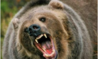В сибіру ведмідь напав на грибників: є загиблі