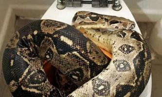 В сибіру жінка виявила у себе в ванній кімнаті товсту змію