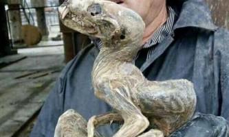 У сибірському алмазному руднику відкопали стародавнє істота