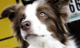 В сша за пост президента країни побореться собака з кентуккі