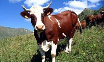 У ставропольському краї один з працівників ферми намагався викрасти худобу