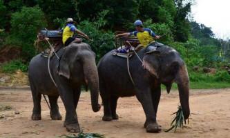 У таїланді слон з туристами на спині вбив погонича і втік