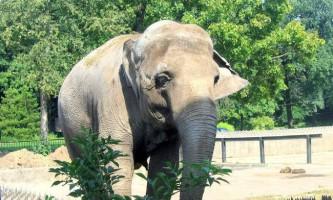 У таїланді слон убив британського туриста