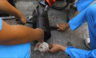 У таїланді врятували застряглого в трубі цуценя
