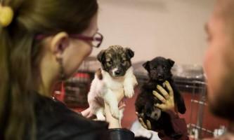 У томську пройшов ярмарок-роздача, де господарів знайшли близько сорока тварин