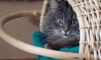 У великобритании юнака притягнули до суду за обкурювання кота марихуаною