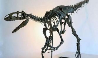 У великобритании проведуть аукціон, на якому продадуть скелет динозавра