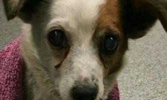 У великобритании собака повернулася до господарів через 5 років після викрадення