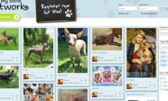 У великобритании створили соціальну мережу для домашніх тварин