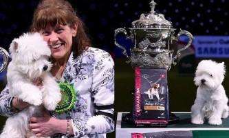 У великобритании вибрали кращу собаку світу