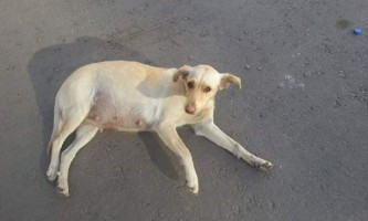 У воронежі вагітну собаку замурували в тротуарній плитці