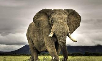 У зимбабве слонів з національного парку отруїли ціанідом