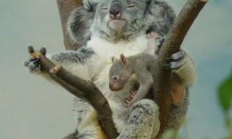 У зоопарку тайбея дітям дозволять нюхати послід тварин