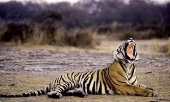 Тварини, яким загрожує небезпека вимирання
