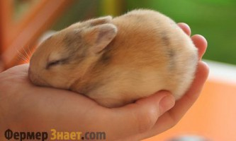 Як довго може прожити кролик в домашніх умови