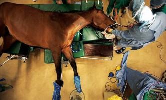 Провідна клініка світу для коней