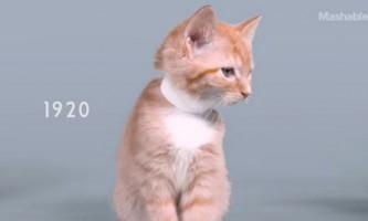 Вікову еволюцію котячої краси показали в хвилинному ролику