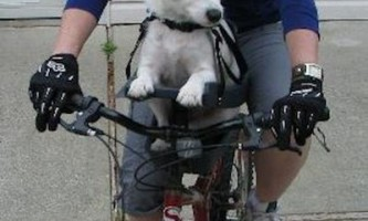 Велосипедне крісло для подорожей з чотириногим другом
