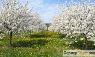 Весняне обрізання дерев - робимо правильно