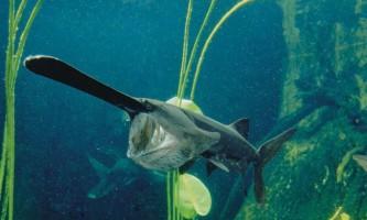 Веслонос - той, хто носить весла під водою