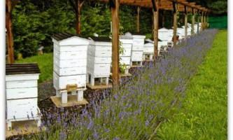 Ветеринарно-санітарні правила утримання бджіл