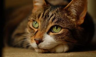 Ветеринари з`ясували, які кішки найбільше не люблять людей