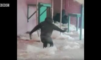 Відео з горилою-балериною зібрало два мільйони переглядів в фейсбуці