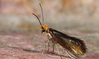 Видоутворення у метеликів: нові види на старій дієті