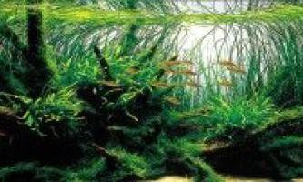 Види акваріумних рослин