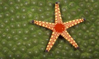 Види морських зірок