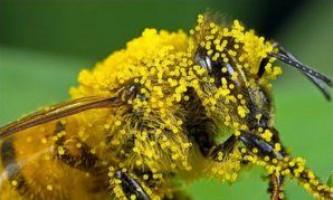 Види продуктів бджільництва, їх використання людиною