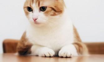 Вітафел c для кішок: інструкція із застосування