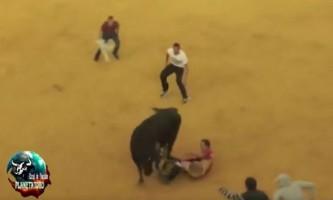 Під час кориди бик повністю розділ іспанця нижче пояса