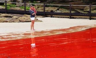 Вода на пляжах австралії придбала страхітливий криваво-червоний відтінок