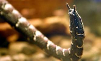 Водяна щупальценосая змія - ще один представник вужів