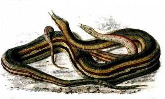 Водні змії: різновиди та особливості життя