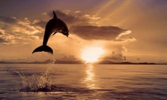 Військові планують використовувати дельфінів для виконання спецзавдань