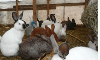 Вольєрне утримання кроликів: переваги, недоліки, облаштування