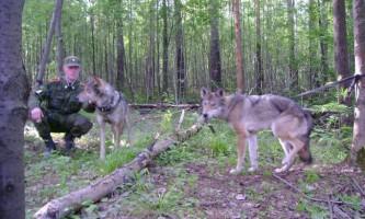 Волкособи стоять на сторожі російських кордонів