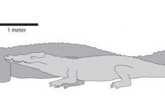 Восьмиметровий доісторичний крокодил харчувався нашими предками