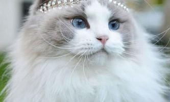 Можливо, це найкрасивіша кішка в світі
