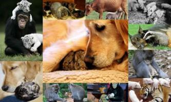 Чи можливо всиновлення в світі тварин?