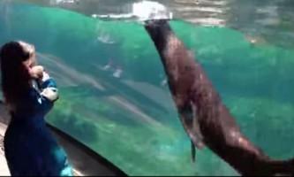 Можливо, морські леви були б хорошими няньками
