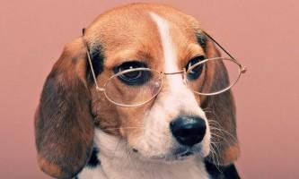 Можливо, собаки телепатично можуть відчувати повернення господарів